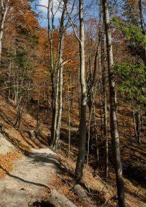 Okruh-Štefanová-Stoh-cesta-do-Medziholia-svislá-podzim-212x300